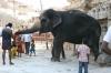 Lakshmi the temple elephant