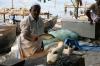 Fischversteigerung