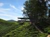 Boh Tea Center & Plantation