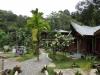 Nora\'s Rainforest