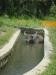Wasserbueffel