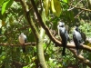 Blackbutt Reserve