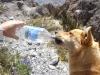 Bari hat Durst