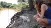...Saebi und Hauskatze beobachten Hausalligator