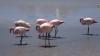 Flamingos bei der Laguna Canapa