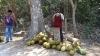 Kokosnussmann