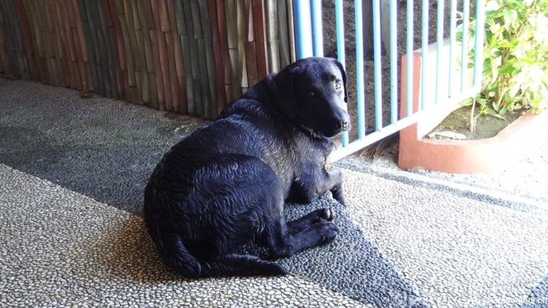 Resorthund