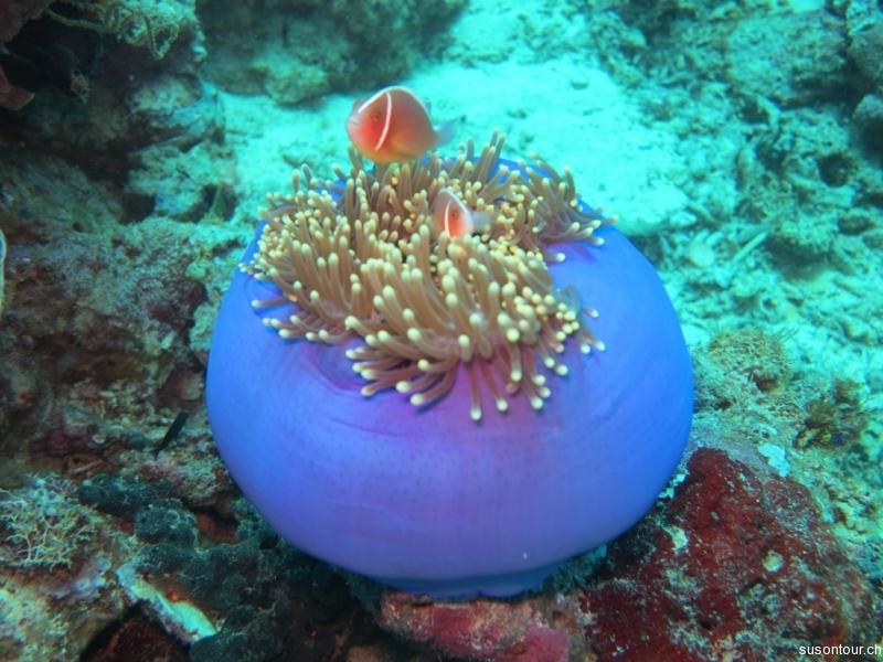Unterwasserwelt von Padre Burgos