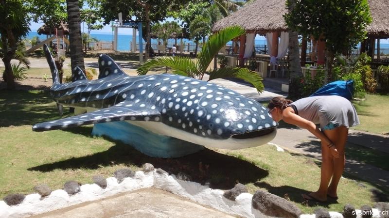 Saebi knutscht Walhai